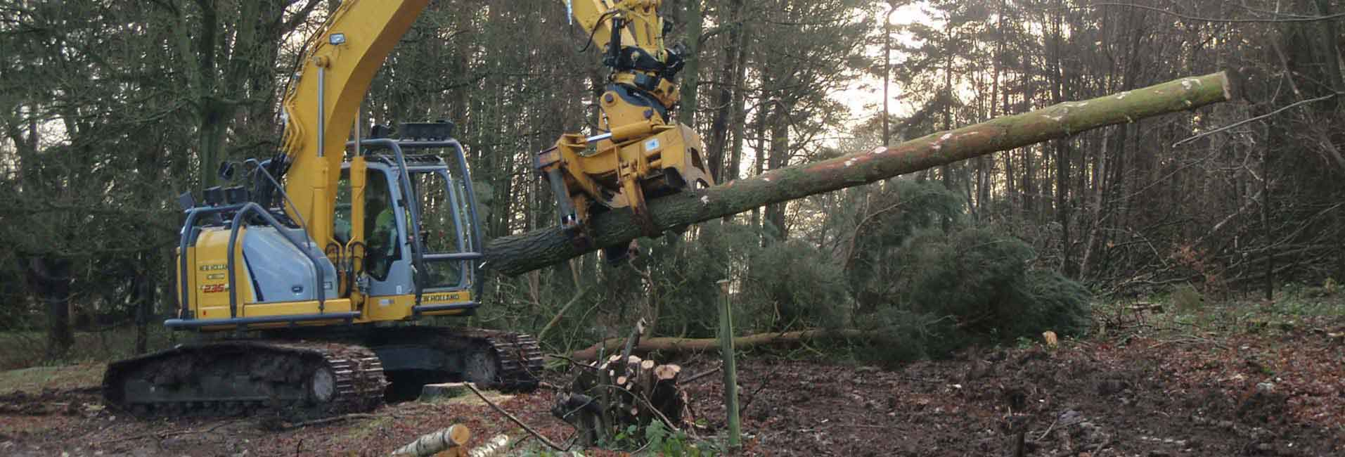Stump Removal & Stump Grinding